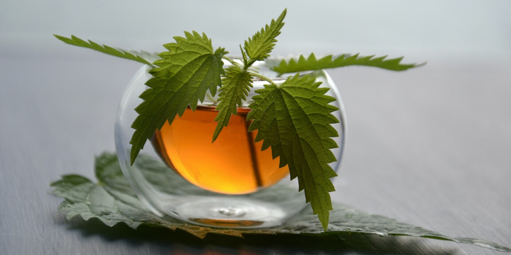 Nettle Tea – A Brew With Benefits
