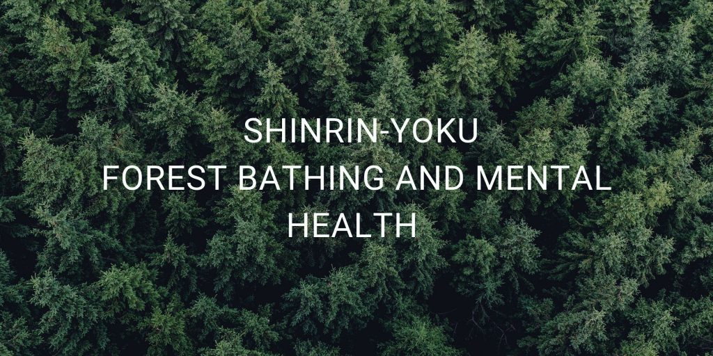 Shinrin-Yoku Explained: What Forest Bathing Can Do For You